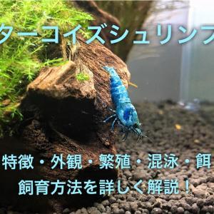 ターコイズシュリンプ飼育・混泳・繁殖方法~青く美しいエビ~