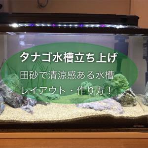 タナゴ水槽立ち上げ!田砂で清涼感ある水槽のレイアウトや作り方!