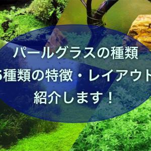 パールグラスの種類・5種類の特徴・レイアウト・育て方を紹介!