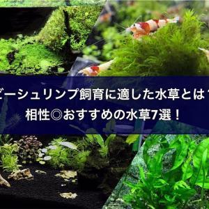 ビーシュリンプ飼育に適した水草とは?相性◎おすすめの水草7選!