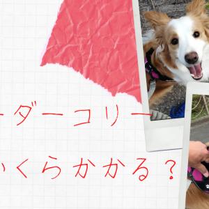 【月々いくら?】愛犬ボーダーコリーの飼う費用を計算してみた!