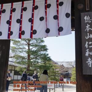 京都で一番遅く咲く桜  仁和寺へ