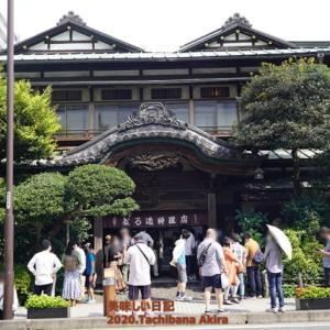 城下町 小田原で行列が出来る『だるま料理店』