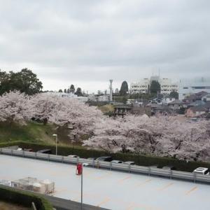 SAKURA/桜も終わり