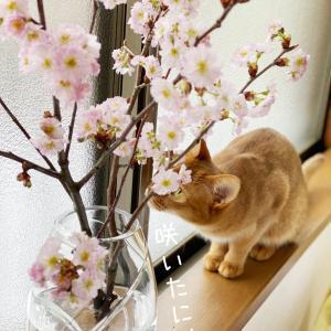 ★花見…雪見?!★