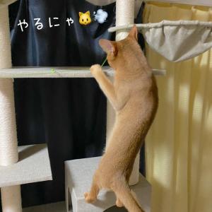 ★アクティブ★ルビ子★