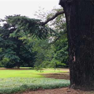 新宿御苑の風景とおすすめの過ごし方