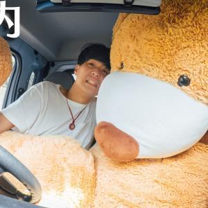 2.5メートルのクマを彼女に届けにいきます。