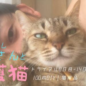 【1人暮らし】彼女はもう僕の女です|保護猫トライアル8日目〜14日目のお話|100均DIY|猫用品