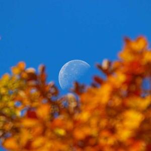 秋の釧路湿原