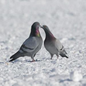 昨日出会った鳥たち