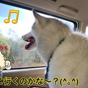 秋色のファーム富田へGO!富良野に向かって黄金色の紅葉ドライブ(*≧∀≦*)