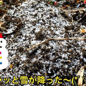 絶好調!ハラハラ舞う雪でさらにパワーアップのハスキーズラン(*^◯^*)/