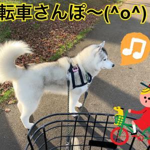 食べませ〜ん!パワフル拒食犬よ、なぜ元気なんだ?(・・?)