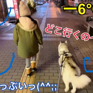 雪に映えるね!冬の札幌ホワイトイルミネーション2019(о´∀`о)