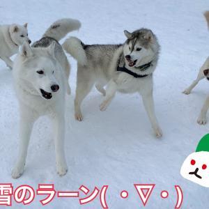 ドカッと恵みの雪!今から本気出すのか?真冬の北海道(*≧∀≦*)/