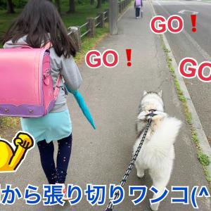 可憐で可愛い♡ビタミンカラーに元気をもらうお散歩道(о´∀`о)