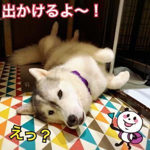 かつては女人禁制の地!女犬のシベリアンが挑む神威岬〜(^○^)/