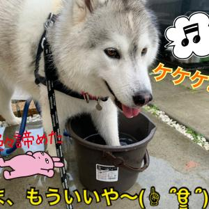 え?マジか…?!雨でもお水遊びのビチャわんこ〜(T ^ T)