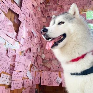 愛の国から幸福へ!ピンク切符が可愛い幸福駅(о´∀`о)