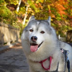 秋色に染まる渓谷!ワンコと一緒に滝めぐり〜(о´∀`о)