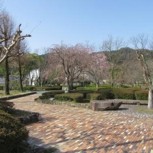 琵琶湖から大文字山