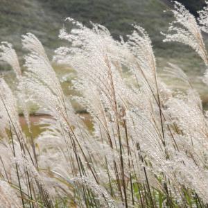 ススキの曽爾高原