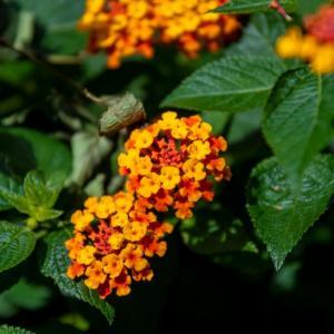 散歩道の花たち 2019年9月