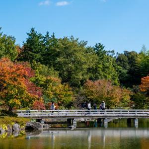 昭和記念公園 日本庭園の紅葉の様子