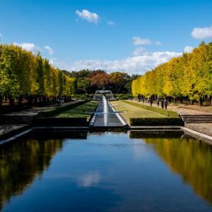 昭和記念公園 イチョウ並木の様子