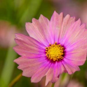 昭和記念公園 秋の花々