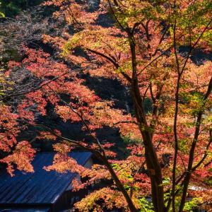 昇仙峡の紅葉 仙娥滝から覚円峰まで
