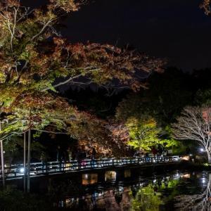 昭和記念公園 秋の夜散歩の様子