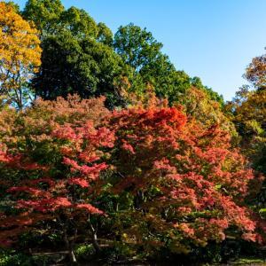 昭和記念公園 水鳥の池周辺の紅葉