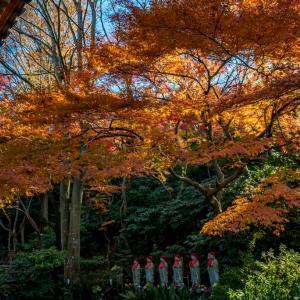 今週の高幡不動尊(12/08)六地蔵さん周りの紅葉 その後