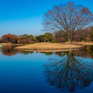 昭和記念公園 晩秋のイチョウ並木(12/14)