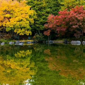 昭和記念公園 日本庭園の水鏡