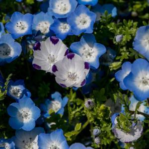 散歩道の花たち(4月)