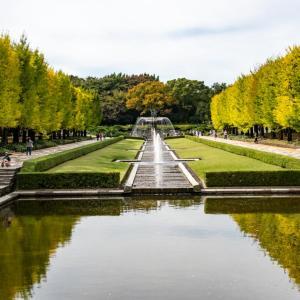 昭和記念公園 イチョウ並木の様子(10/18)