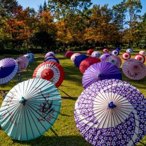 昭和記念公園 日本庭園の紅葉