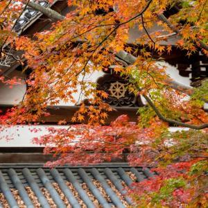 今週の高幡不動尊(11/29) 紅葉もそろそろ終わりか
