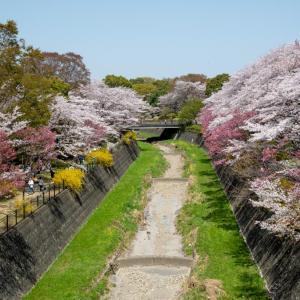 昭和記念公園 昨年の様子(過去写真)残堀川の春景色