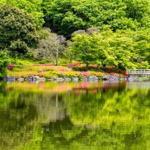 昭和記念公園 日本庭園の水風景