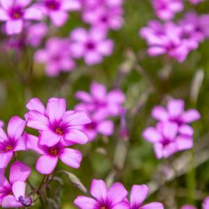 浅川河川敷の花たち