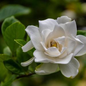 昭和記念公園 夏の花