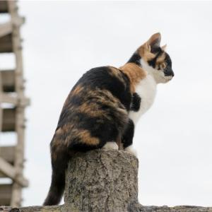 【一日一枚写真】狛猫【一眼レフ】