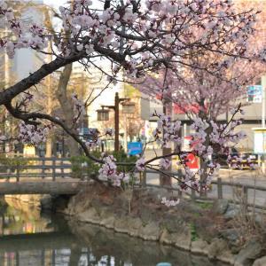 【一日一枚写真】春の池辺【一眼レフ】