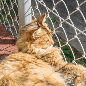 【一日一枚写真】神戸のソマリ猫【一眼レフ】