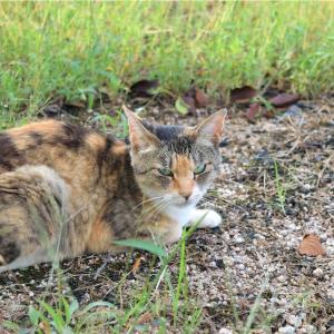 【一日一枚写真】畔の三毛猫②【一眼レフ】