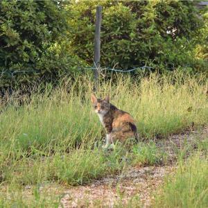 【一日一枚写真】畔の三毛猫③【一眼レフ】